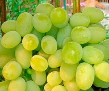 Виноград Плевен купить онлайн