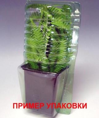 Сеслерія чорноквіткова фото