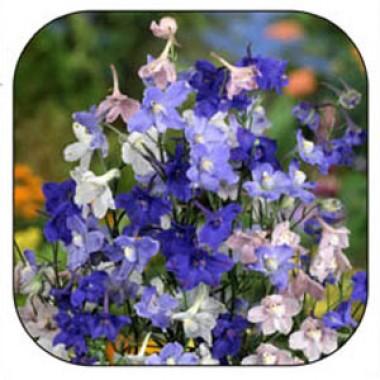 Насіння квітів купить