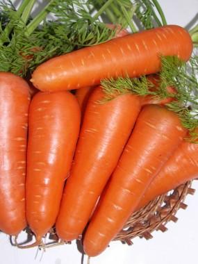 Морква Абако смотреть
