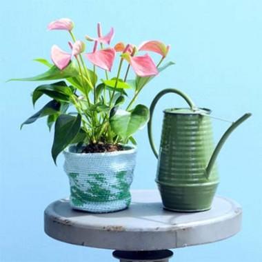 Кімнатні рослини купить