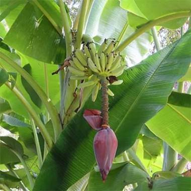 Декоративные комнатные плодовые растения