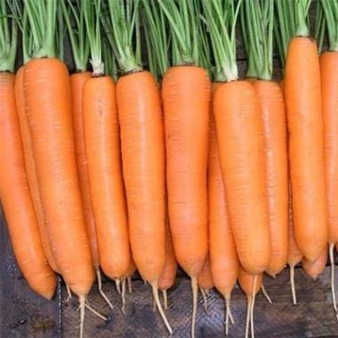 Морква Сіркана фото цена