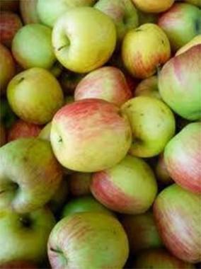 Яблуня Делькорф фото цена