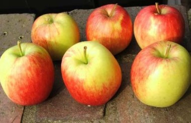 Яблуня Делькорф купить онлайн