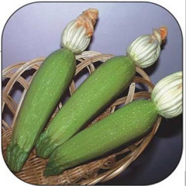 Насіння кабачків