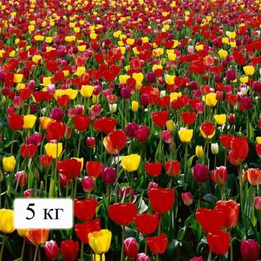 Мінеральні добрива Для квітів (на 200 м. кв) почтой