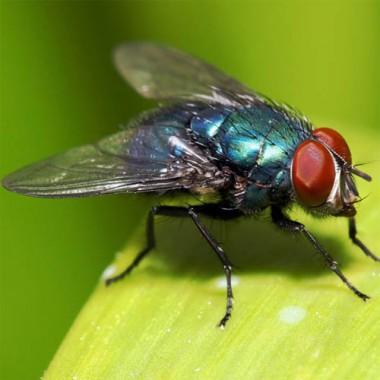 Наклейки проти мух почтой