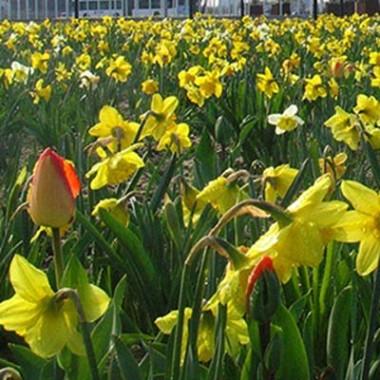 Мікс ландшафтний Floriade фото