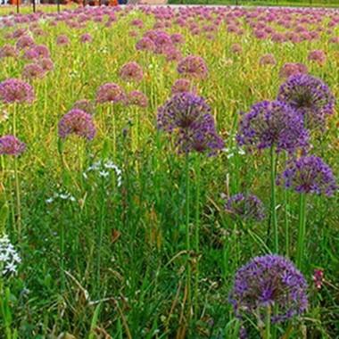 Мікс ландшафтний Floriade фото цена