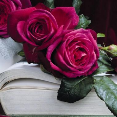Троянда Johann Wolfgang von Goethe  в киеве