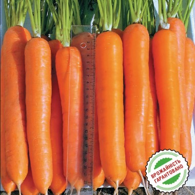 Морква Лагуна почтой