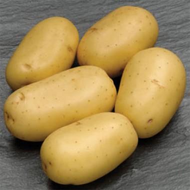 Картопля Carrera фото
