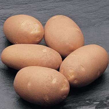 Картопля Fabula  фото