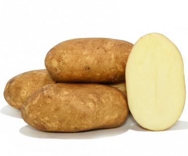 Насіння картоплі купить