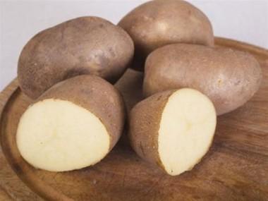 Картопля Innovator фото