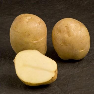 Картопля Jaerla фото