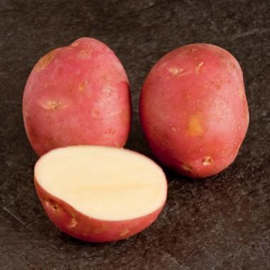 Картопля Mozart описание