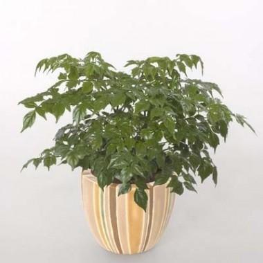 Зелені кімнатні рослини