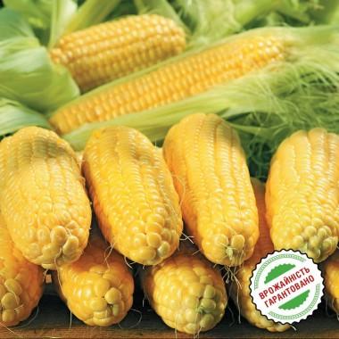Насіння кукурудзи купить