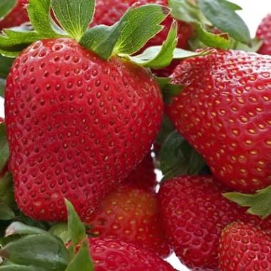 Саджанці плодових купить