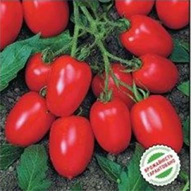 Насіння помідорів