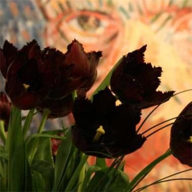 Тюльпан Vincent van Gogh фото