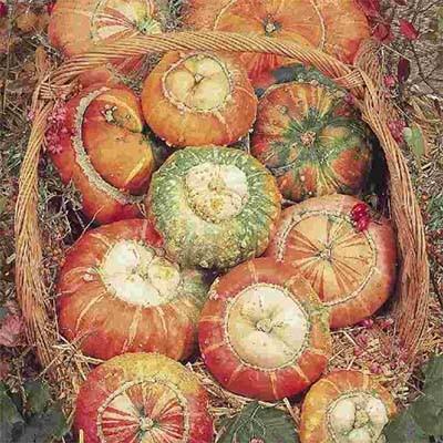 Гарбуз Turkish Turban Large фото