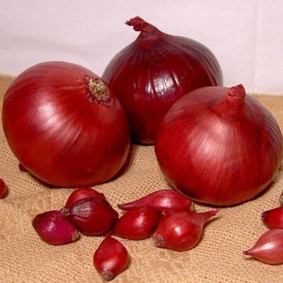 Цибуля Red Karmen фото