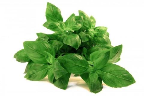 Базилік зелений Містер Барнс фото