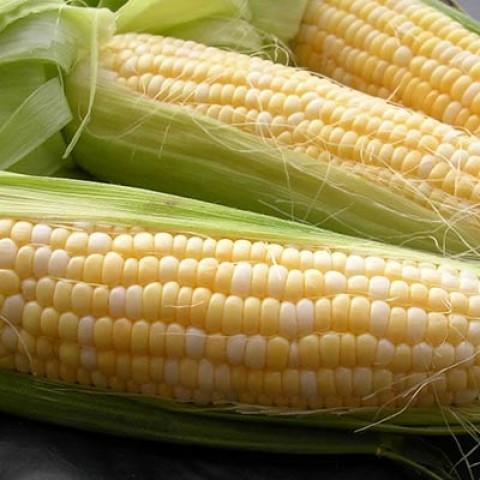 Кукурудза Делікатесна фото