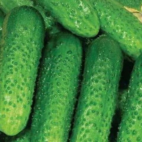 Огірок Пальчик фото