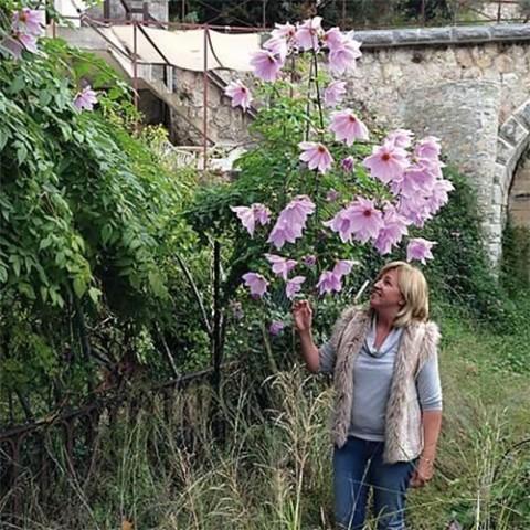 Жоржина Imperiallis фото