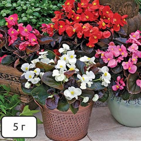 Нутріфлекс F (для кімнатних квітів) фото
