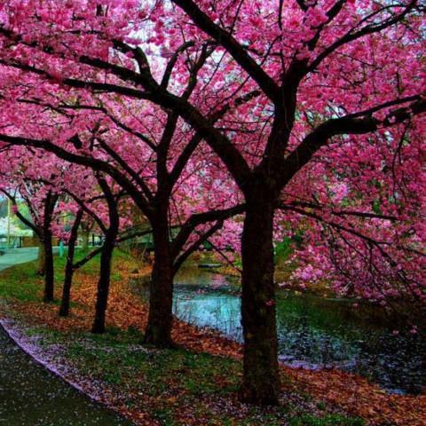 Мінеральні добрива Для саду (на 50 дерев) фото