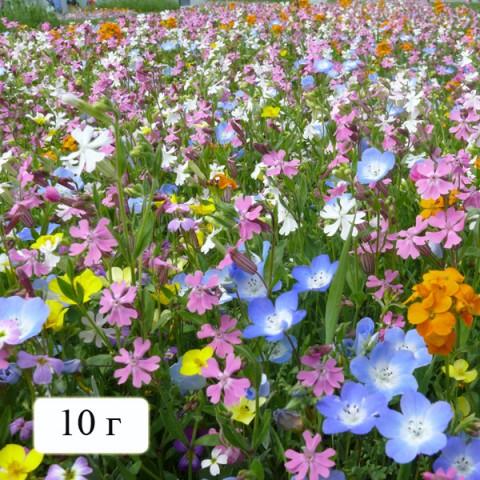 Газон-міні Квіткова суміш Альпійський луг фото