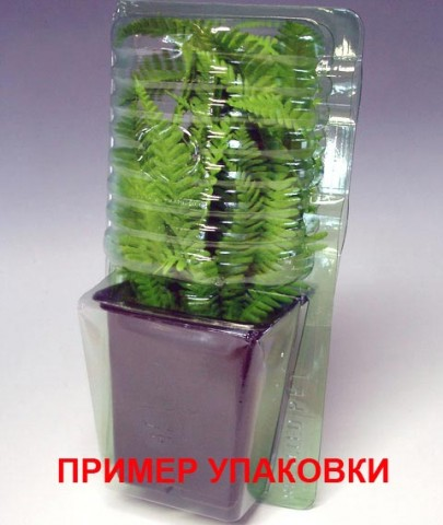 Лобелія Hadspen Purple фото