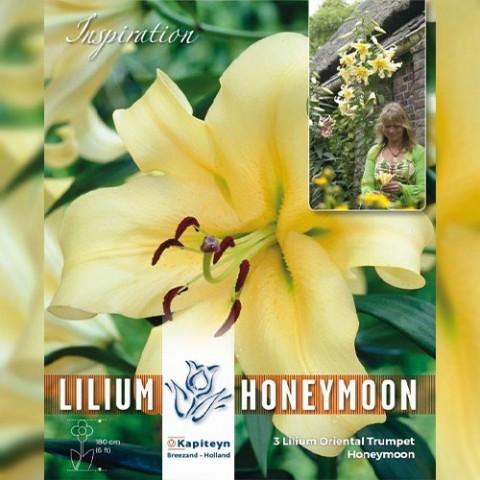 Лілія Honeymoon (Брендові цибулини KAPITEYN®) фото