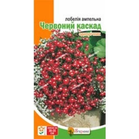 Лобелія ампельна Червоний каскад фото
