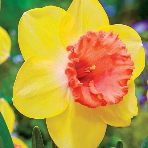 Нарцис Color Run фото