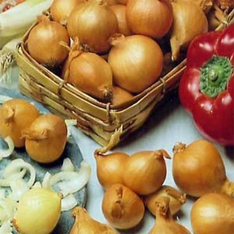Цибуля Golden Gourmet шалот Озима фото