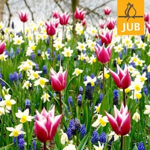 Мікс ландшафтний Palette of Spring (Брендові цибулини Jub Holland) фото
