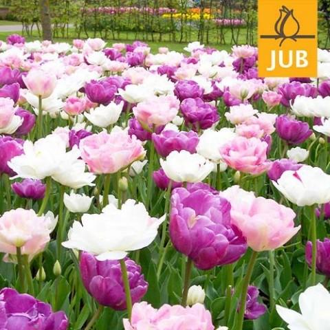 Мікс ландшафтний Peaceful Pastels (Брендові цибулини Jub Holland) фото