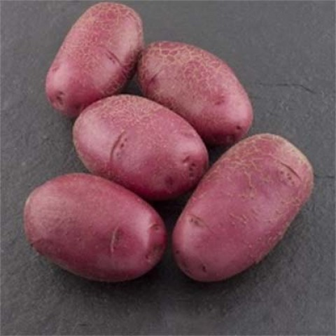 Картопля Фламенко фото