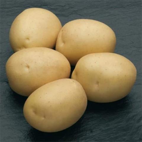 Картопля Сільвана фото