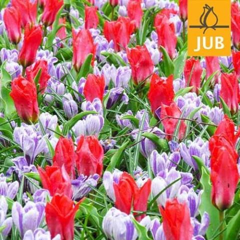 Мікс ландшафтний Promise of Spring (Брендові цибулини Jub Holland) фото