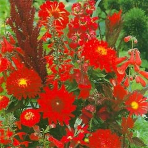 Літня суміш Червоних відтінків фото