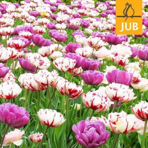 Мікс ландшафтний Spring Peonies (Брендові цибулини Jub Holland) фото