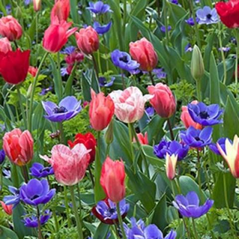 Мікс ландшафтний Spring Spectacle фото