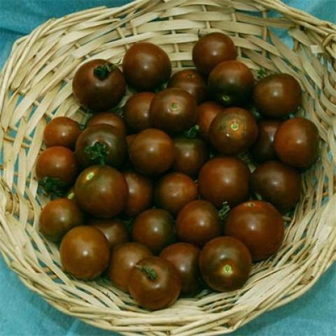 Помідор Brown Berry фото